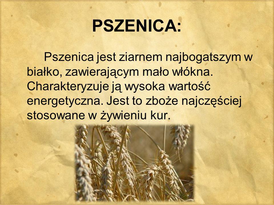 PSZENICA: