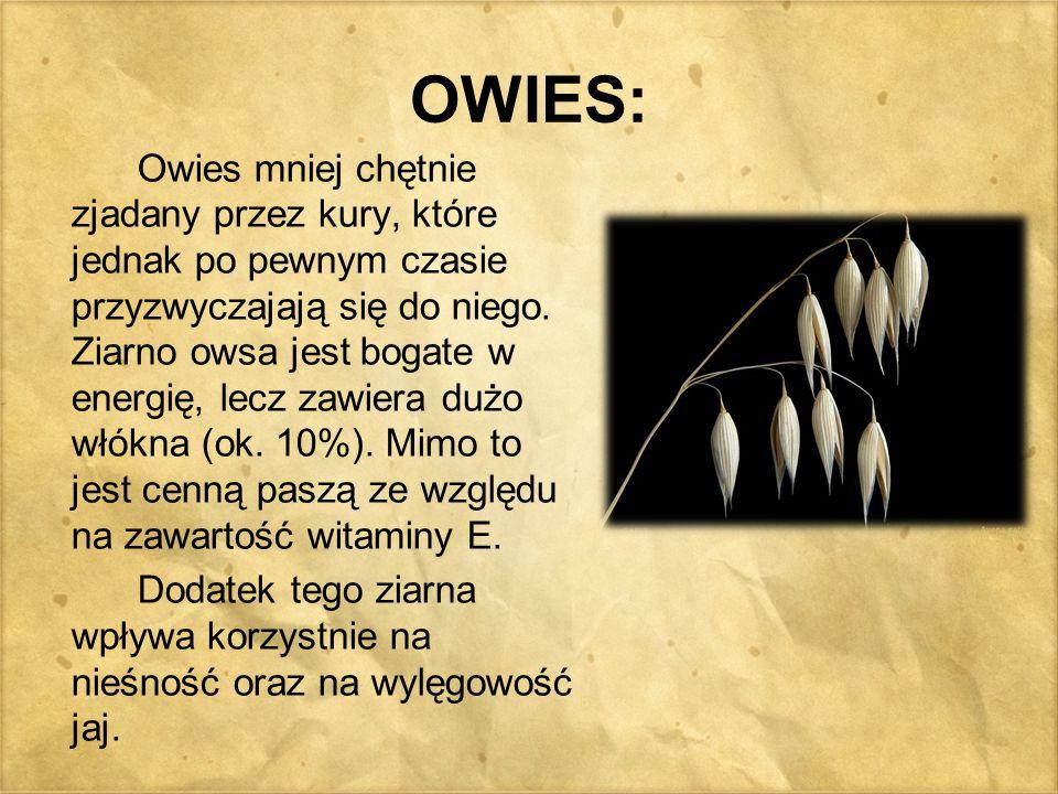 OWIES:
