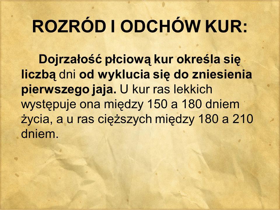 ROZRÓD I ODCHÓW KUR: