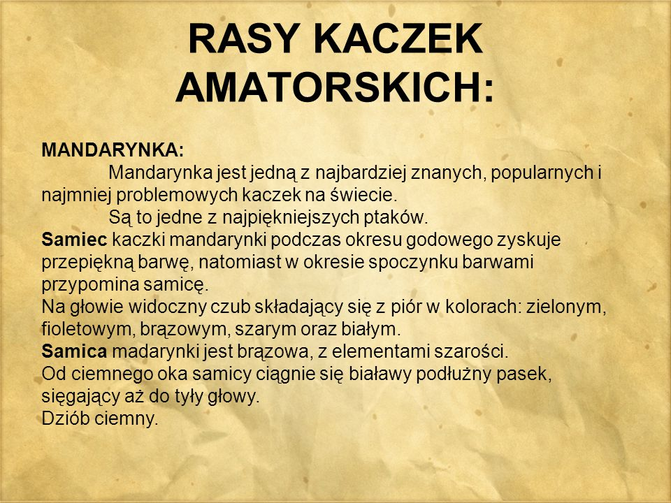 RASY KACZEK AMATORSKICH: