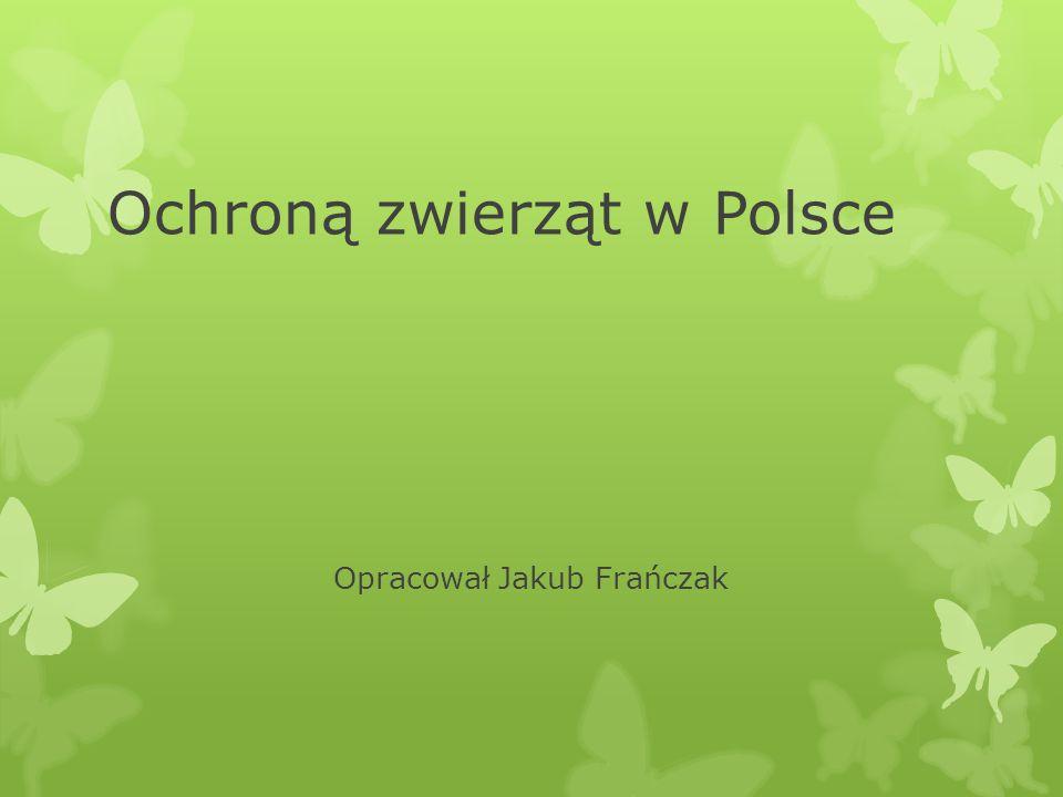 Ochroną zwierząt w Polsce