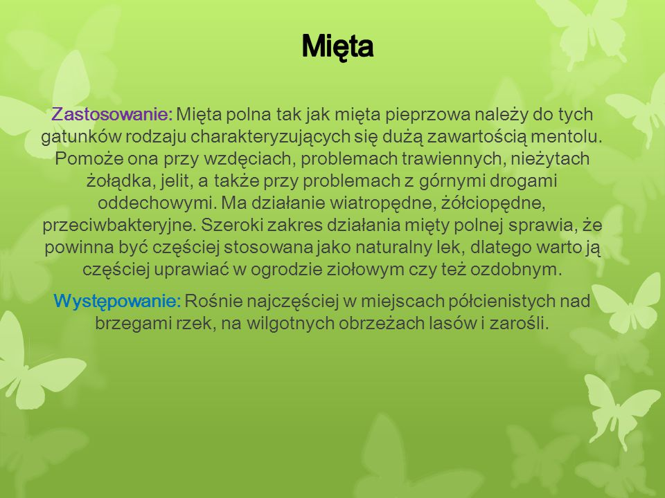 Mięta