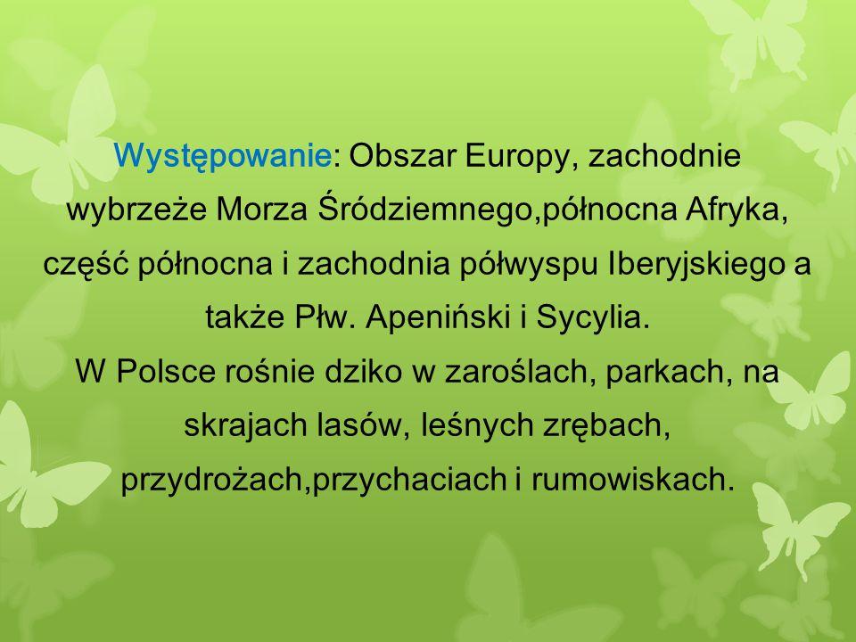 Występowanie: Obszar Europy, zachodnie wybrzeże Morza Śródziemnego,północna Afryka, część północna i zachodnia półwyspu Iberyjskiego a także Płw. Apeniński i Sycylia.