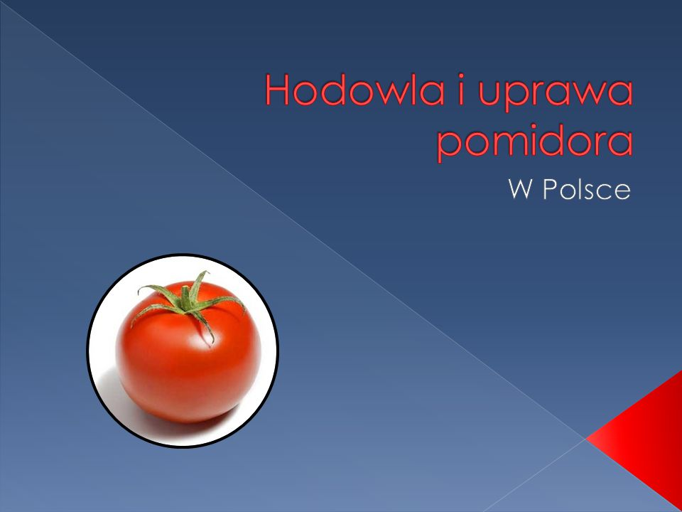 Hodowla i uprawa pomidora