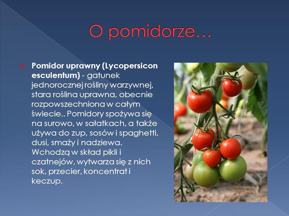 O pomidorze…