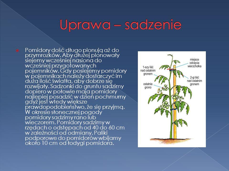 Uprawa – sadzenie