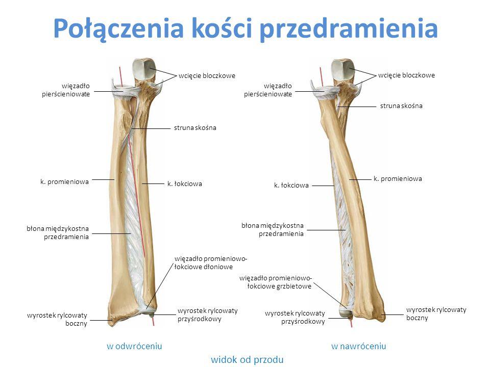 Połączenia kości przedramienia