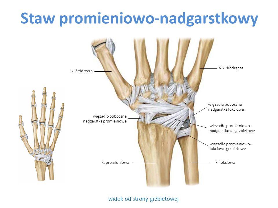 Staw promieniowo-nadgarstkowy