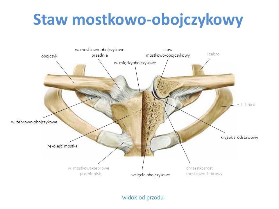 Staw mostkowo-obojczykowy