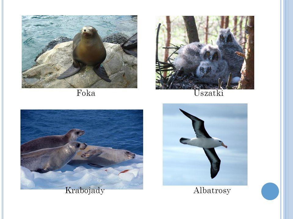 Foka Uszatki Krabojady Albatrosy