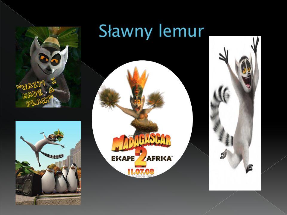 Sławny lemur