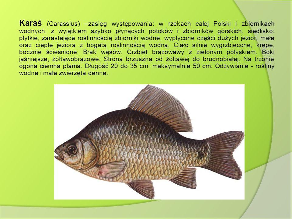 Karaś (Carassius) –zasięg występowania: w rzekach całej Polski i zbiornikach wodnych, z wyjątkiem szybko płynących potoków i zbiorników górskich, siedlisko: płytkie, zarastające roślinnością zbiorniki wodne, wypłycone części dużych jezior, małe oraz ciepłe jeziora z bogatą roślinnością wodną.