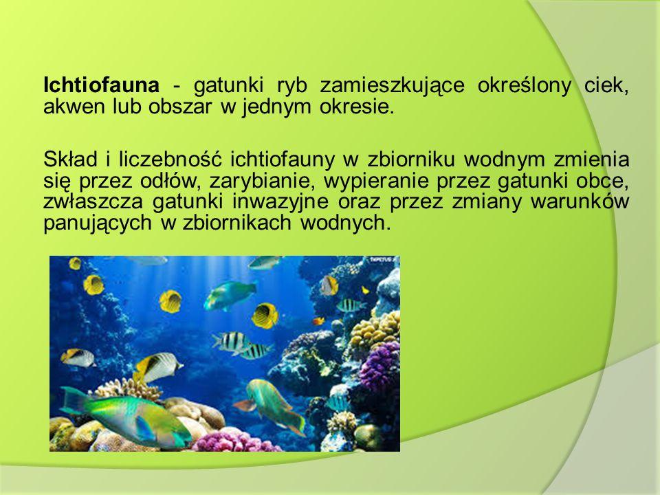Ichtiofauna - gatunki ryb zamieszkujące określony ciek, akwen lub obszar w jednym okresie.