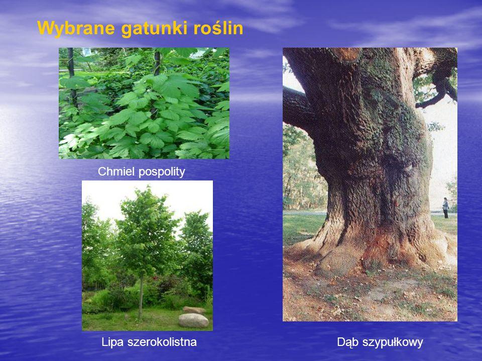 Wybrane gatunki roślin