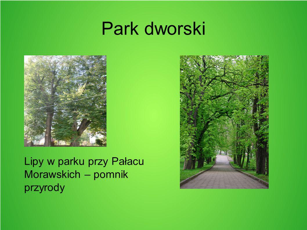 Park dworski Lipy w parku przy Pałacu Morawskich – pomnik przyrody