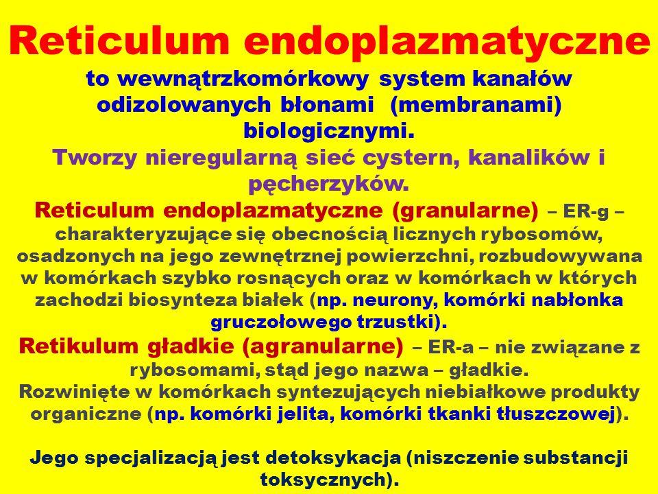 Reticulum endoplazmatyczne to wewnątrzkomórkowy system kanałów odizolowanych błonami (membranami) biologicznymi.