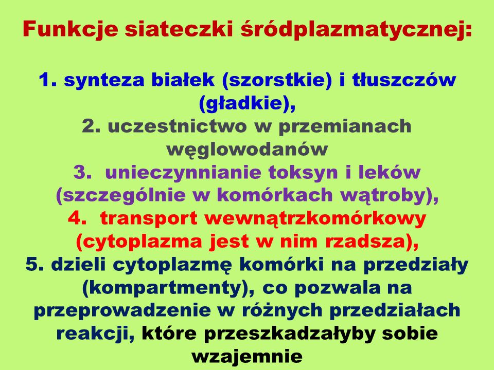 Funkcje siateczki śródplazmatycznej: 1