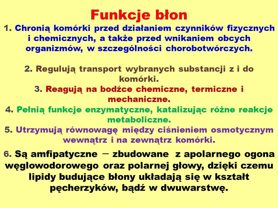 Funkcje błon 1.