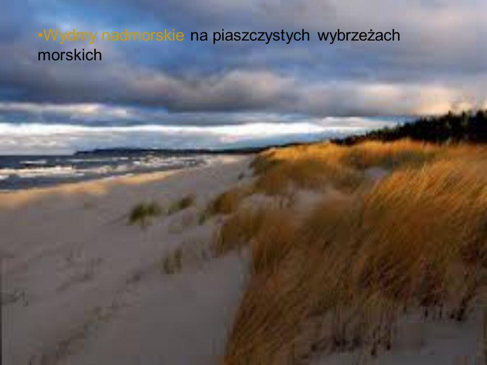 Wydmy nadmorskie na piaszczystych wybrzeżach morskich