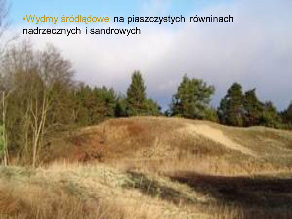 Wydmy śródlądowe na piaszczystych równinach nadrzecznych i sandrowych