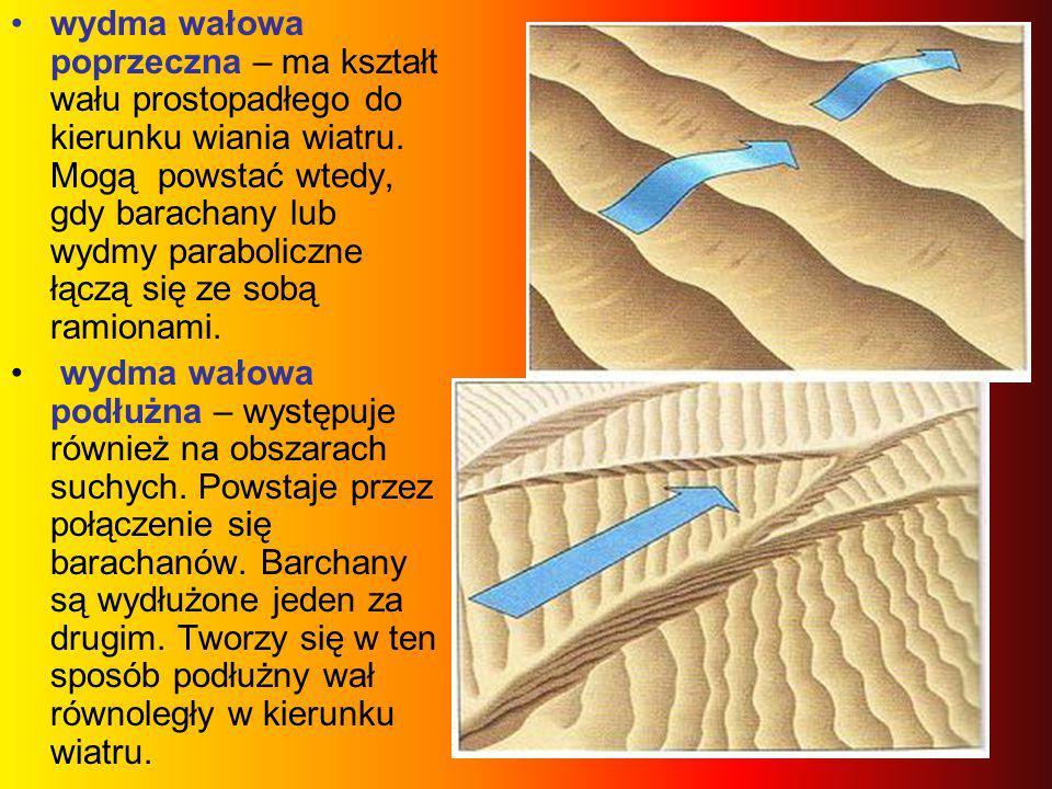 wydma wałowa poprzeczna – ma kształt wału prostopadłego do kierunku wiania wiatru. Mogą powstać wtedy, gdy barachany lub wydmy paraboliczne łączą się ze sobą ramionami.