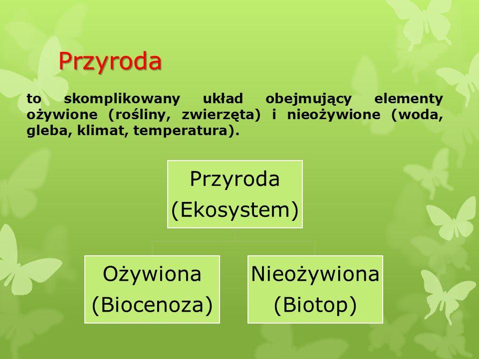 Przyroda Przyroda (Ekosystem) Ożywiona (Biocenoza) Nieożywiona