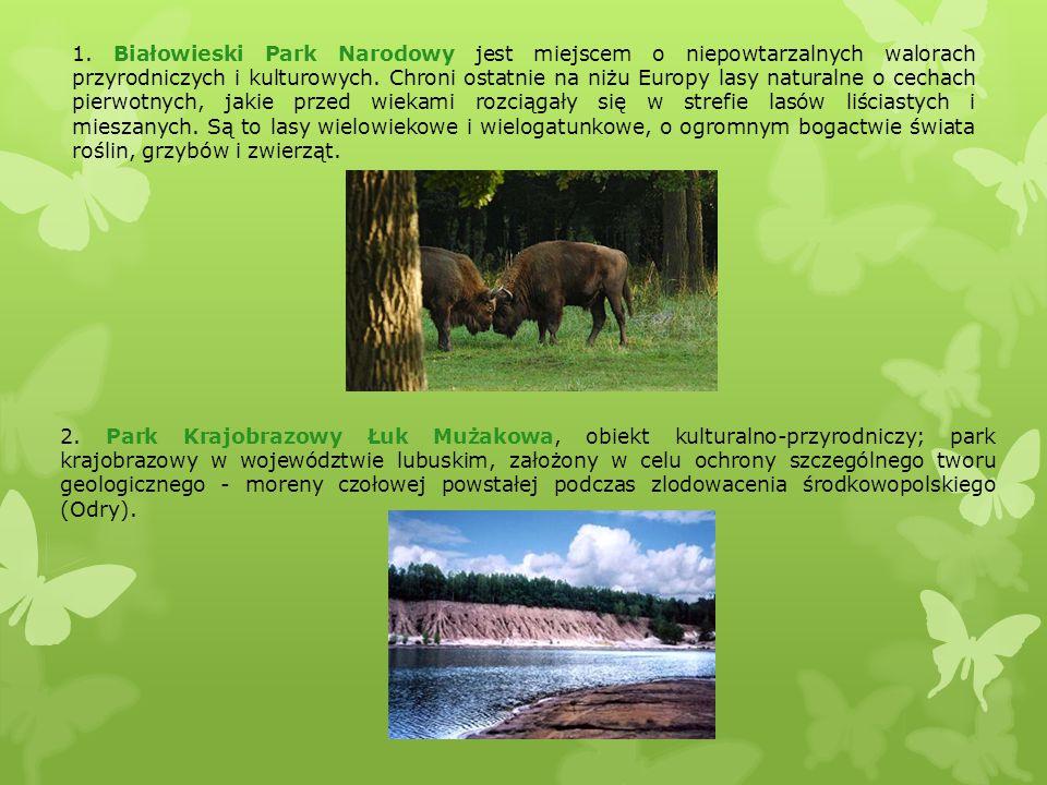 1. Białowieski Park Narodowy jest miejscem o niepowtarzalnych walorach przyrodniczych i kulturowych. Chroni ostatnie na niżu Europy lasy naturalne o cechach pierwotnych, jakie przed wiekami rozciągały się w strefie lasów liściastych i mieszanych. Są to lasy wielowiekowe i wielogatunkowe, o ogromnym bogactwie świata roślin, grzybów i zwierząt.