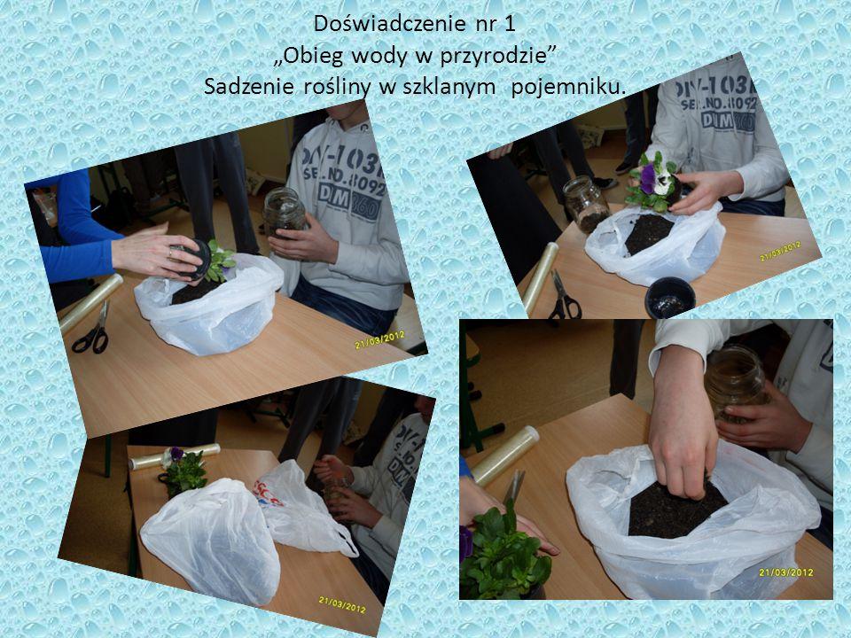"""Doświadczenie nr 1 """"Obieg wody w przyrodzie Sadzenie rośliny w szklanym pojemniku."""