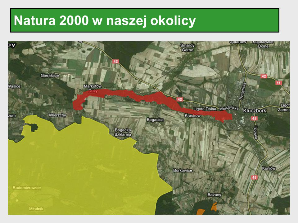 Natura 2000 w naszej okolicy