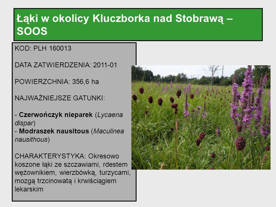 Łąki w okolicy Kluczborka nad Stobrawą – SOOS