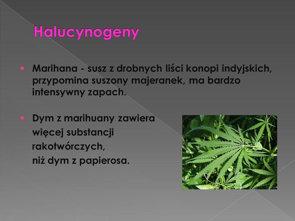 Halucynogeny Marihana - susz z drobnych liści konopi indyjskich, przypomina suszony majeranek, ma bardzo intensywny zapach.