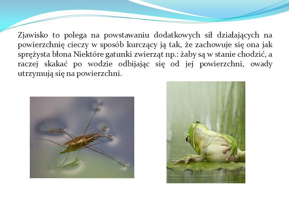 Zjawisko to polega na powstawaniu dodatkowych sił działających na powierzchnię cieczy w sposób kurczący ją tak, że zachowuje się ona jak sprężysta błona Niektóre gatunki zwierząt np.: żaby są w stanie chodzić, a raczej skakać po wodzie odbijając się od jej powierzchni, owady utrzymują się na powierzchni.