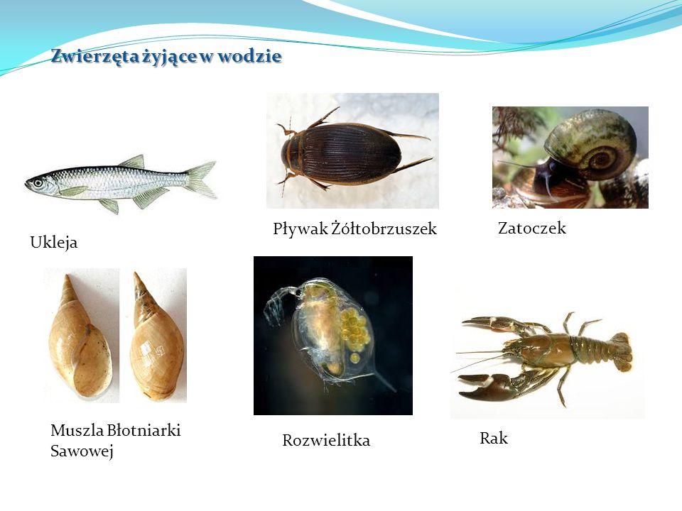 Zwierzęta żyjące w wodzie