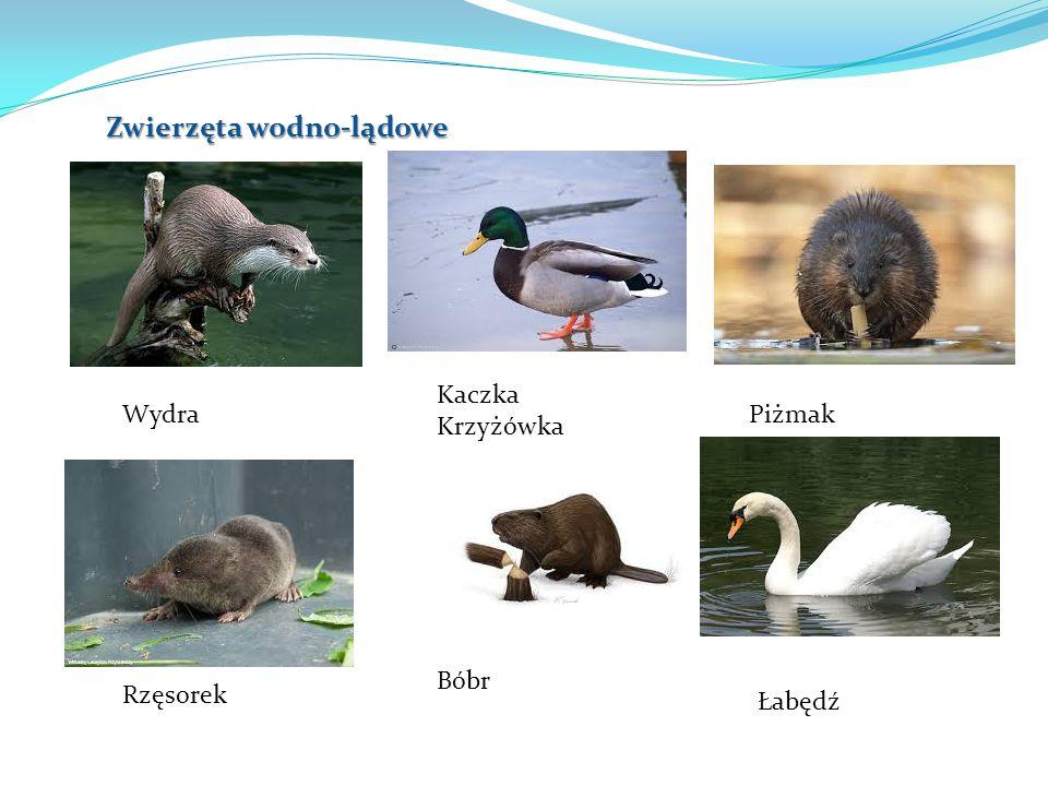 Zwierzęta wodno-lądowe