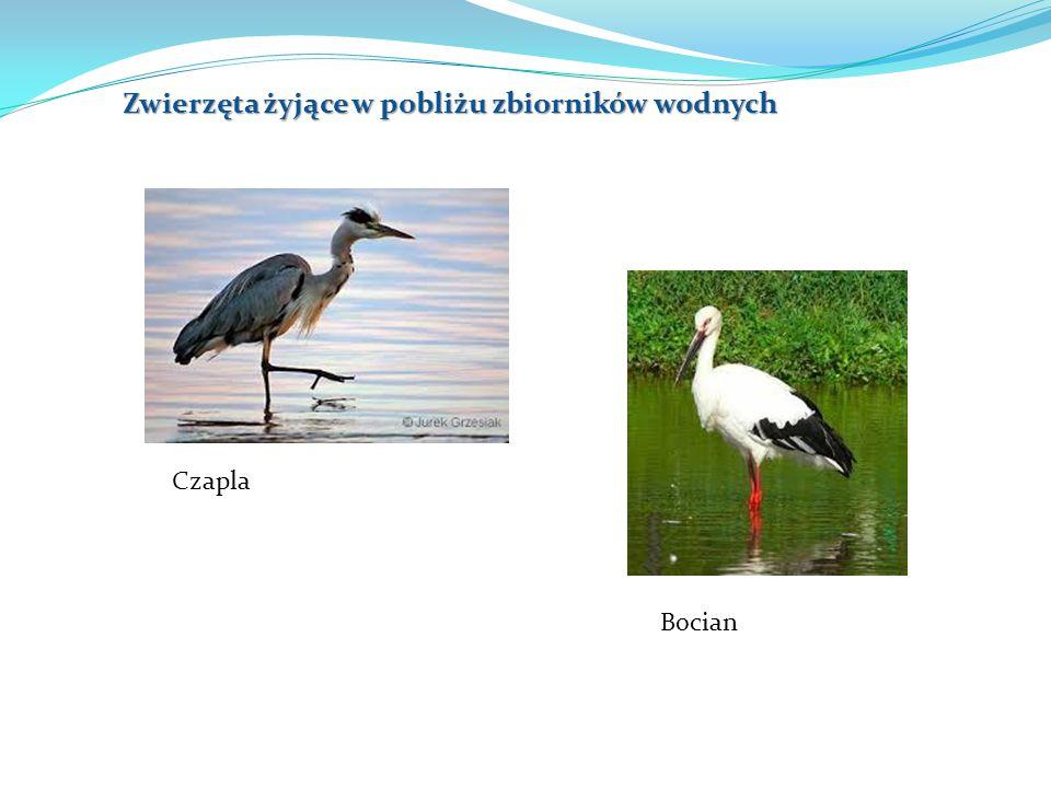 Zwierzęta żyjące w pobliżu zbiorników wodnych