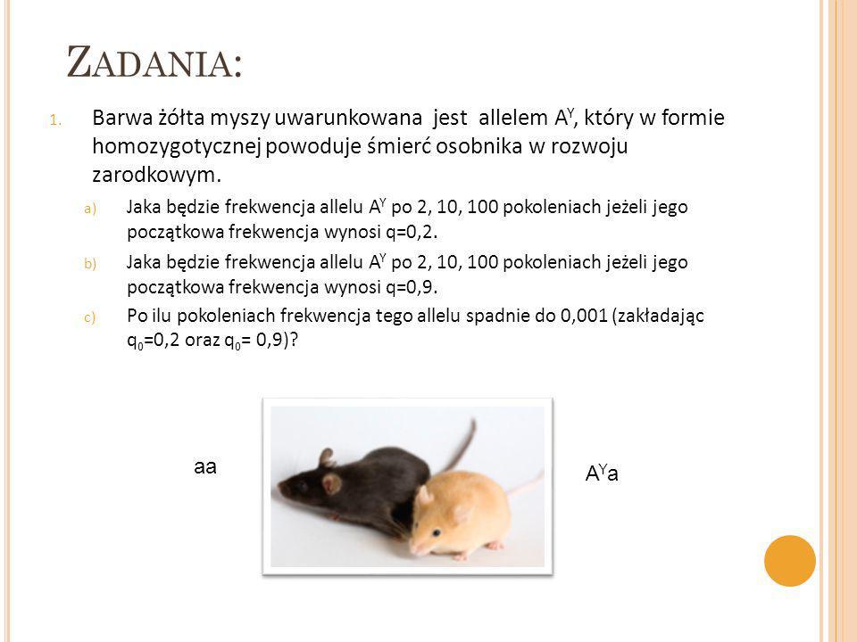 Zadania: Barwa żółta myszy uwarunkowana jest allelem AY, który w formie homozygotycznej powoduje śmierć osobnika w rozwoju zarodkowym.