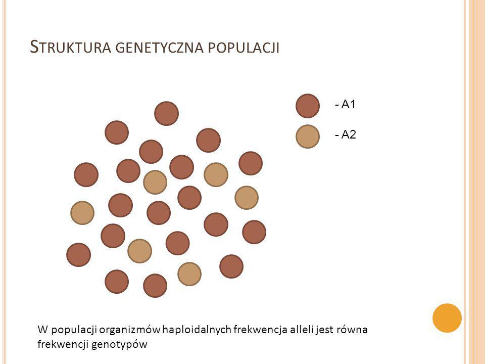 Struktura genetyczna populacji