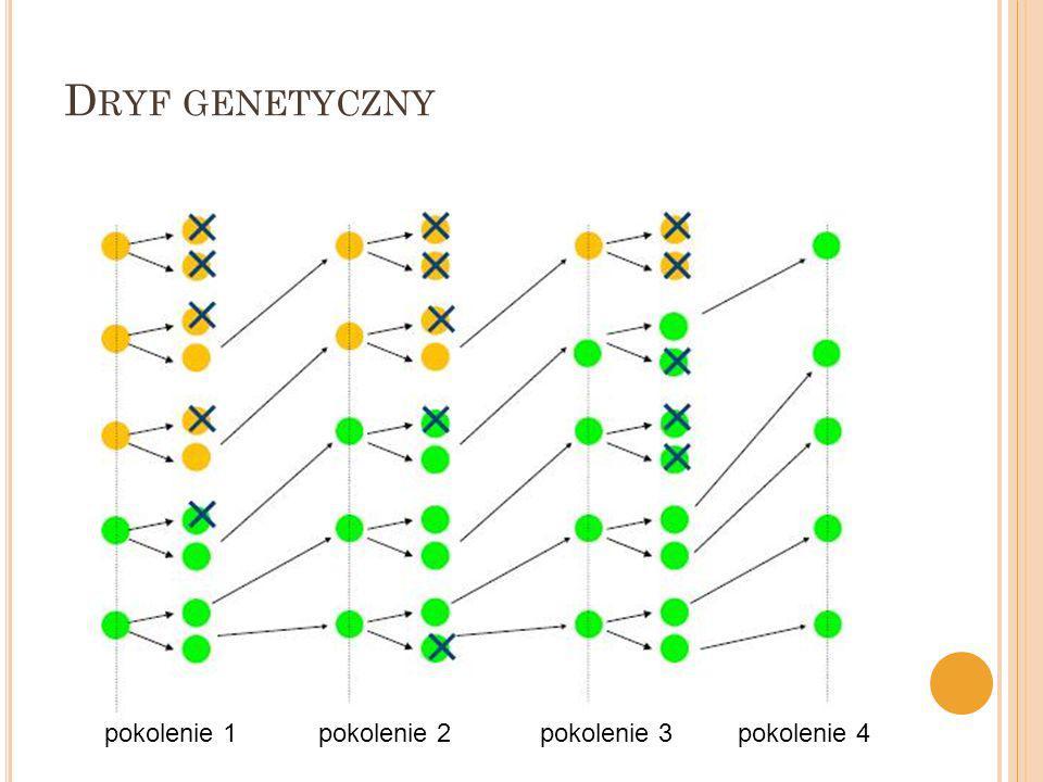 Dryf genetyczny pokolenie 1 pokolenie 2 pokolenie 3 pokolenie 4