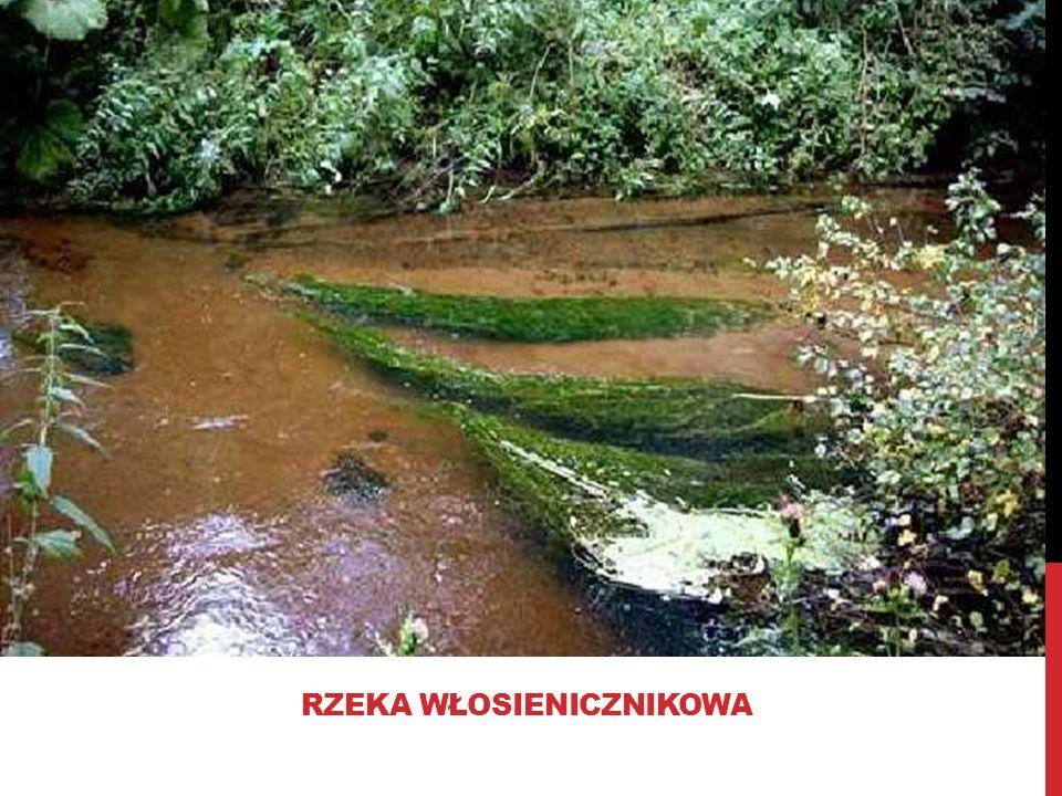 Rzeka włosienicznikowa
