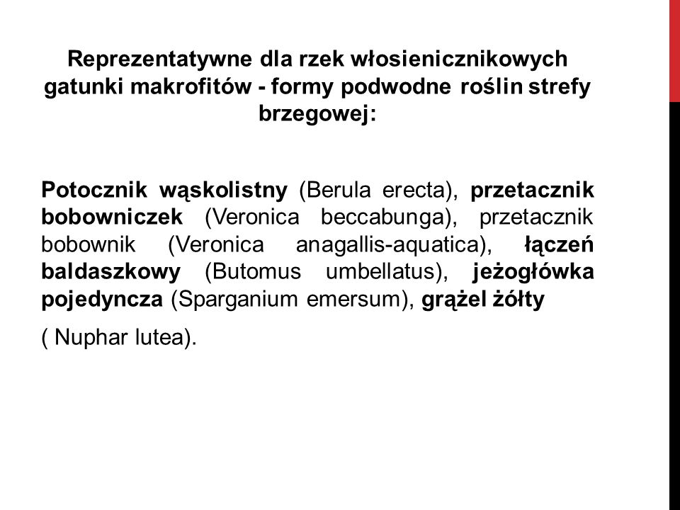 Reprezentatywne dla rzek włosienicznikowych gatunki makrofitów - formy podwodne roślin strefy brzegowej: Potocznik wąskolistny (Berula erecta), przetacznik bobowniczek (Veronica beccabunga), przetacznik bobownik (Veronica anagallis-aquatica), łączeń baldaszkowy (Butomus umbellatus), jeżogłówka pojedyncza (Sparganium emersum), grążel żółty ( Nuphar lutea).