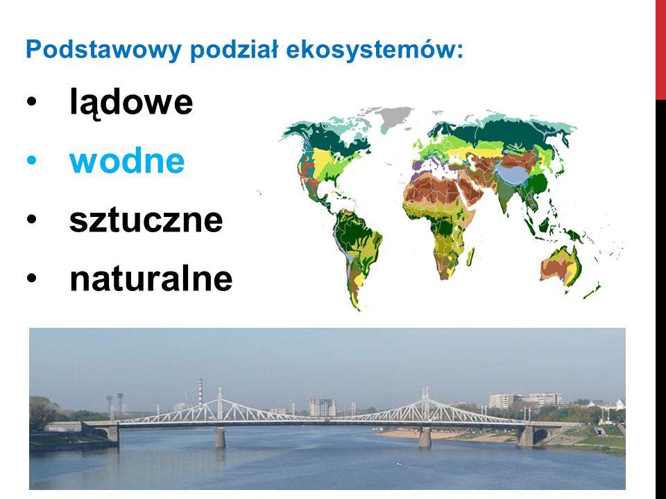 Podstawowy podział ekosystemów: