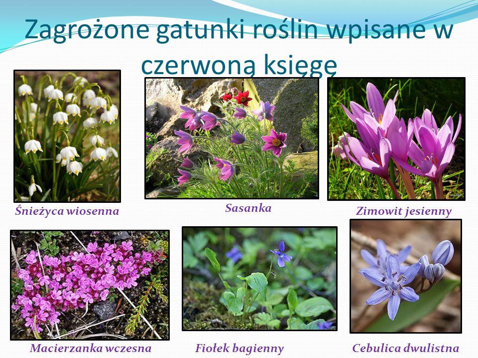 Zagrożone gatunki roślin wpisane w czerwoną księgę