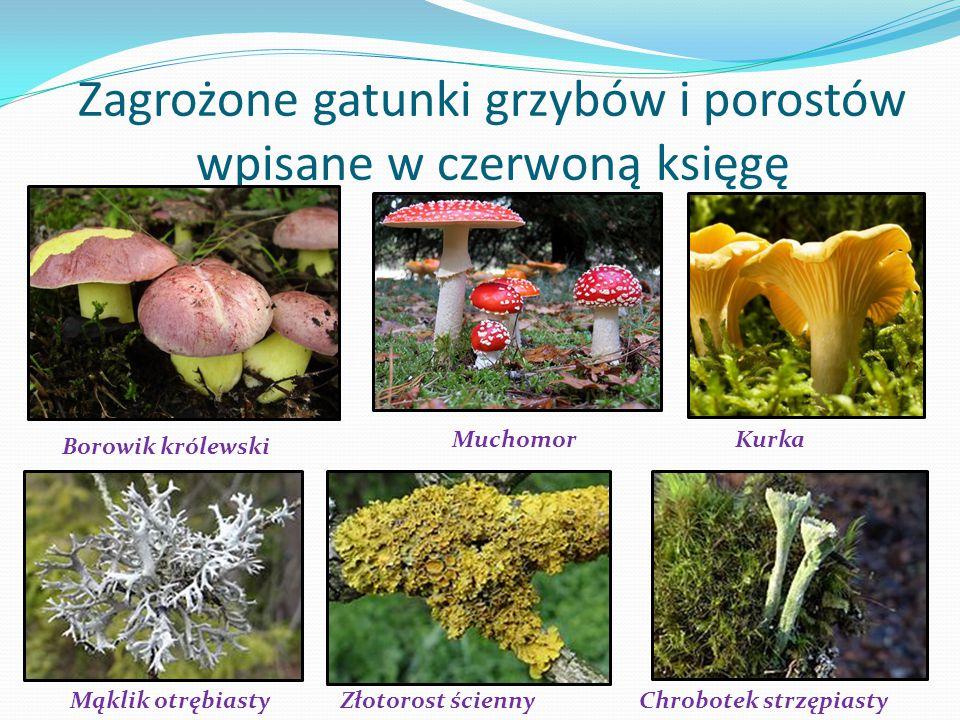 Zagrożone gatunki grzybów i porostów wpisane w czerwoną księgę