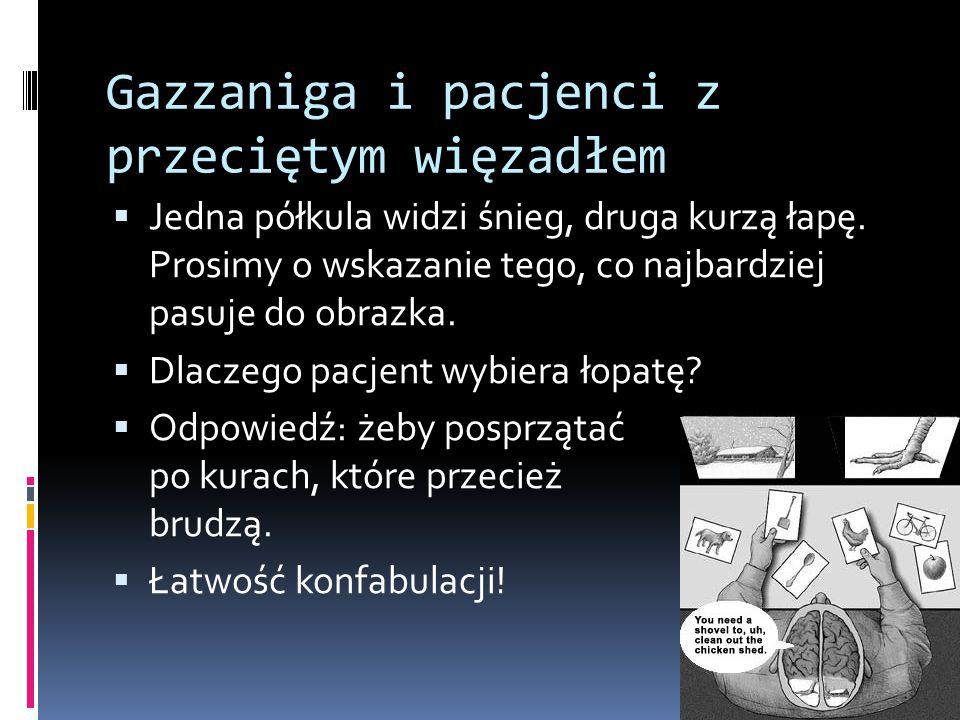 Gazzaniga i pacjenci z przeciętym więzadłem