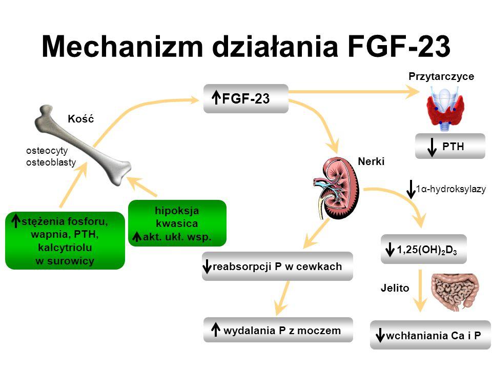 Mechanizm działania FGF-23