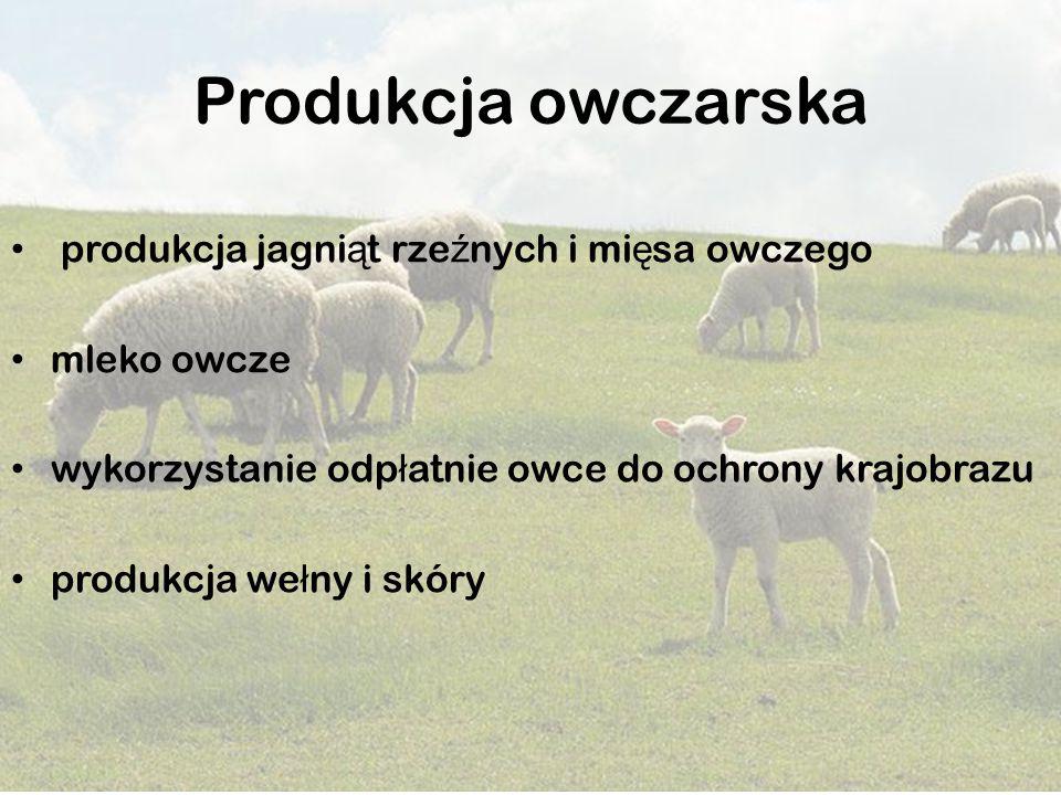 Produkcja owczarska produkcja jagniąt rzeźnych i mięsa owczego