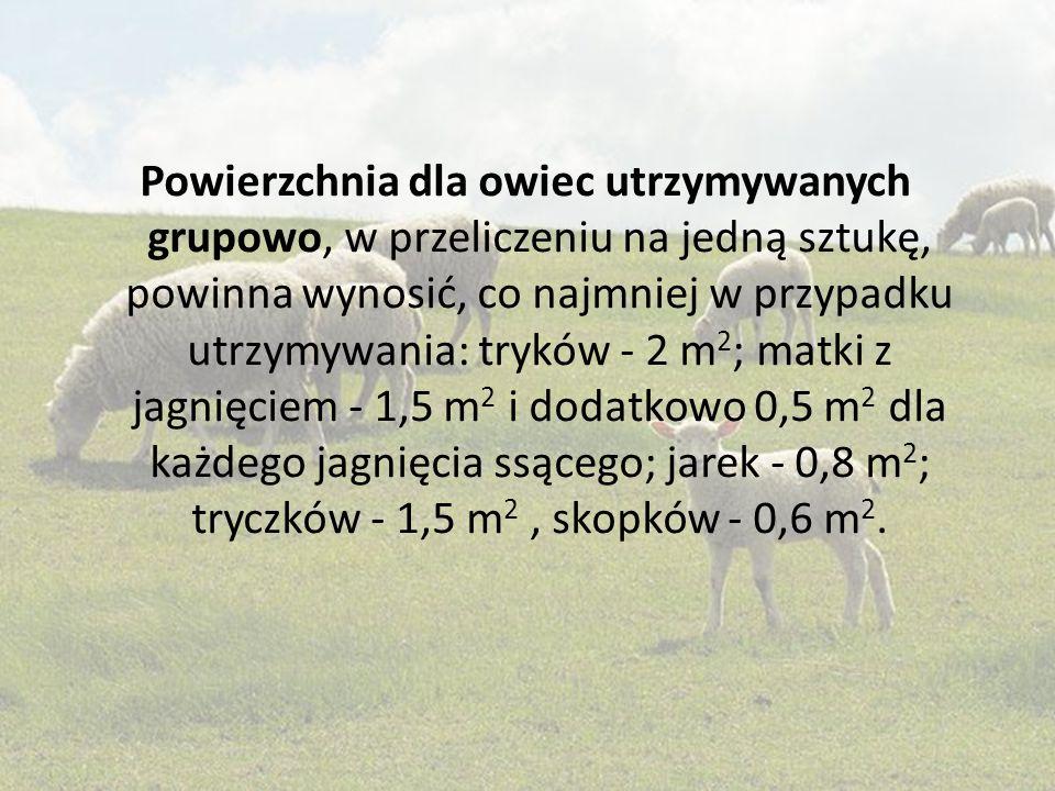 Powierzchnia dla owiec utrzymywanych grupowo, w przeliczeniu na jedną sztukę, powinna wynosić, co najmniej w przypadku utrzymywania: tryków - 2 m2; matki z jagnięciem - 1,5 m2 i dodatkowo 0,5 m2 dla każdego jagnięcia ssącego; jarek - 0,8 m2; tryczków - 1,5 m2 , skopków - 0,6 m2.