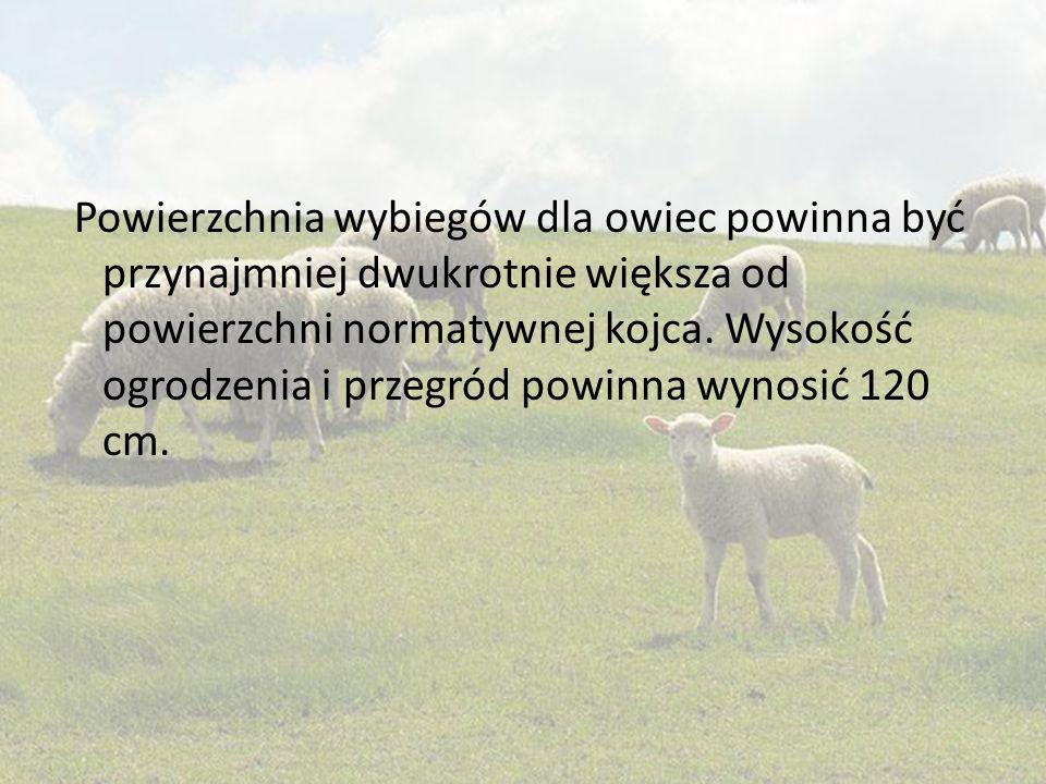 Powierzchnia wybiegów dla owiec powinna być przynajmniej dwukrotnie większa od powierzchni normatywnej kojca.