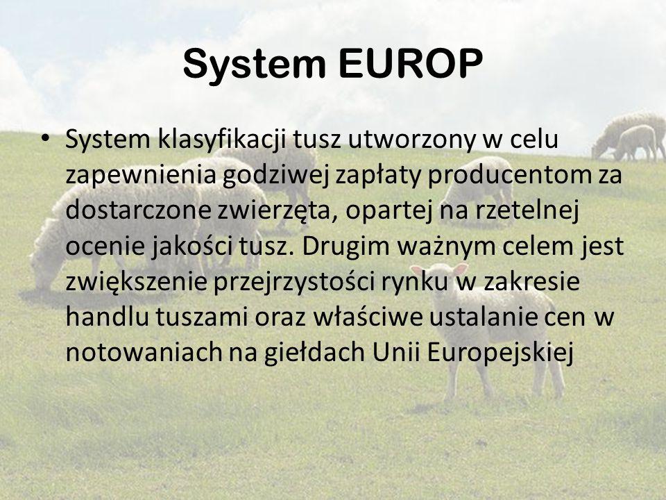 System EUROP