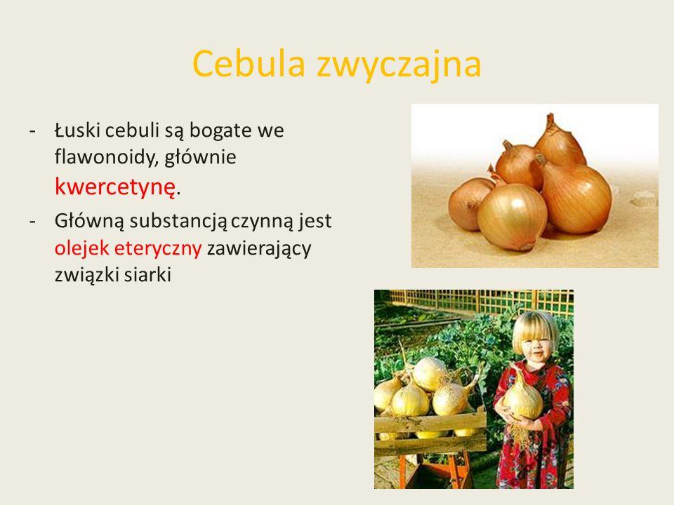 Cebula zwyczajna Łuski cebuli są bogate we flawonoidy, głównie kwercetynę.